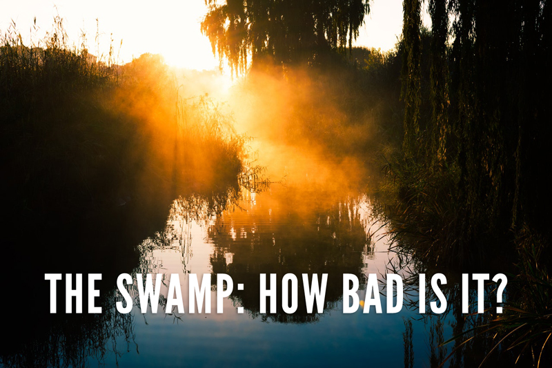 THE-SWAMP-Pexels